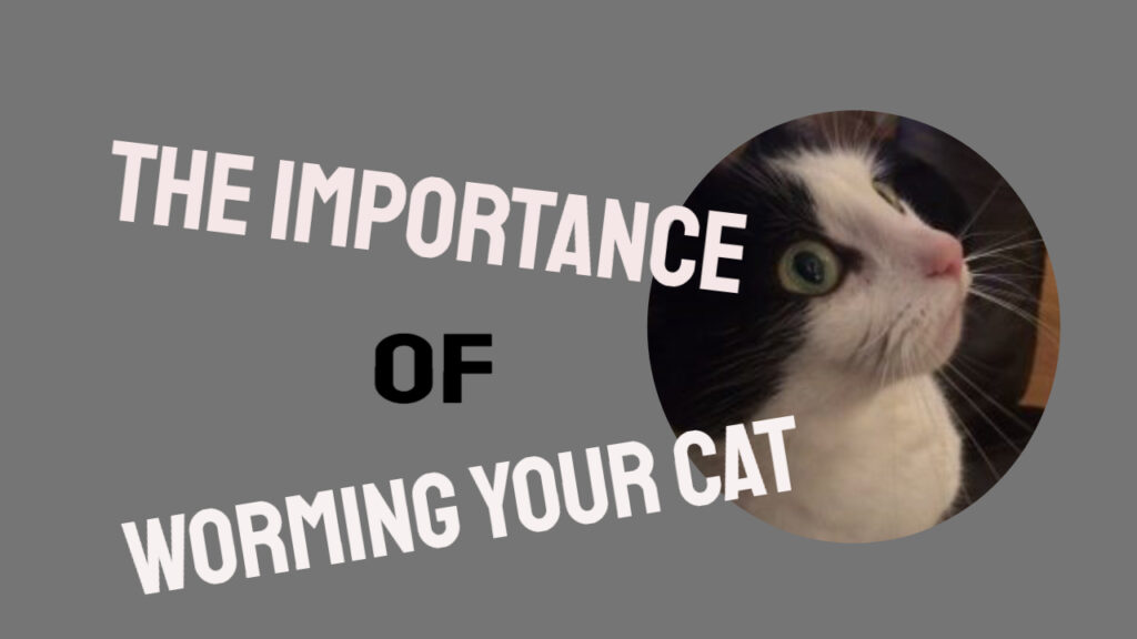 worming your cat