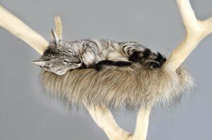 cat sleeping in a tree nest