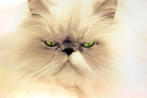 cat-face of a persion